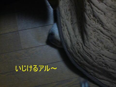 n298.jpg